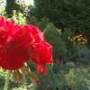 Virágos ház